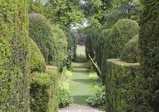 有一条道路的修剪的花园庭院绿色树篱之间 免版税库存照片