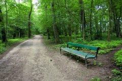 有一条长凳的绿色森林在路 免版税库存图片