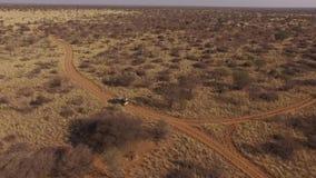 有一根开放树干的一辆吉普横跨纳米比亚的大草原移动 股票录像