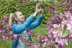 有一根长的公平的头发的年轻美丽的妇女在开花的苹果树附近拍在手机的照片 免版税图库摄影