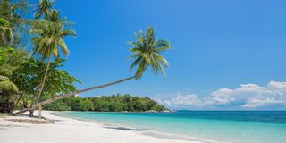 有一棵倾斜的棕榈树的热带海滩全景,在新加坡印度尼西亚附近的Bintan海岛 免版税库存照片