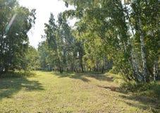 有一棵倾斜草的一个美丽的草甸在森林里在晴朗的夏日 免版税库存图片