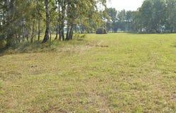 有一棵倾斜草的一个美丽的草甸在森林里在晴朗的夏日 库存图片