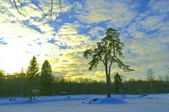 有一棵杉木的海岛在一个积雪的结冰的池塘a中间 免版税库存照片