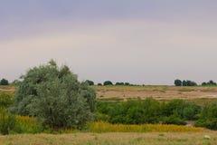 有一棵树的大草原在自然 免版税图库摄影