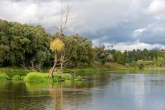 有一棵树的海岛在河 免版税库存照片