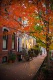 有一棵红色叶子树的Pictoresque街在秋天在Georgetow 库存图片