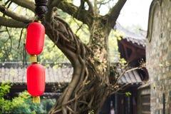 有一棵老树和一个寺庙的中国灯笼在背景中 库存图片