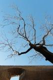 有一棵死的树的石墙,反对天空 库存图片