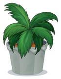有一棵绿色叶茂盛植物的一个罐 免版税库存图片