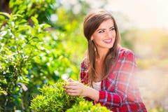 有一点树的美丽的花匠,绿色晴朗的自然 免版税图库摄影
