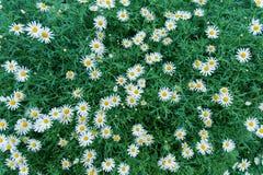 有一点白花的庭院 库存图片