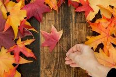 有一片美丽的红色叶子的手 秋天到达 免版税库存图片