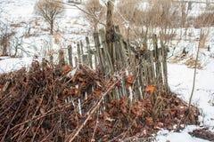 有一片老叶子的老打破的篱芭 免版税库存图片