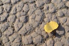 有一片金黄叶子的沙漠 库存图片