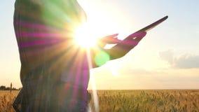有一种片剂的女孩农夫在日落期间的麦田 片剂是特写镜头 股票录像