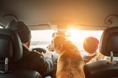 有一起旅行由自动后座广角射击的儿子和小猎犬狗的父亲 免版税图库摄影
