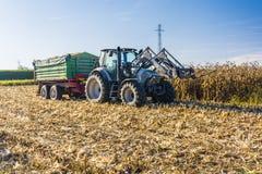 有一辆绿色拖车的被烙记的拖拉机在玉米的领域 库存照片