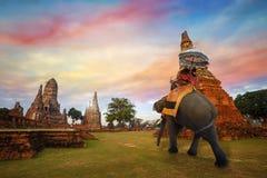 有一头大象的游人在Wat Chaiwatthanaram寺庙在Ayuthaya,泰国 库存图片