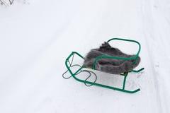 有一件披肩的爬犁在雪 库存照片