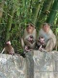 有三个孩子的猴子家庭 库存照片
