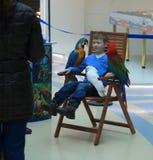 有三只鹦鹉的坐的男孩 图库摄影