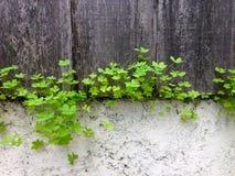 有三叶草植物的春天 库存照片