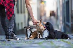 有三条小狗的妇女在鹅卵石路 免版税库存照片