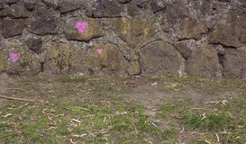 有三桃红色心脏的石墙 免版税库存图片