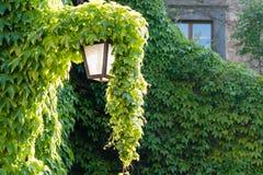 有上面常春藤的老街灯 免版税库存图片