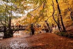 有下落的叶子的木桥在湖 免版税库存照片