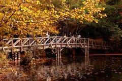 有下落的叶子的木桥在湖 免版税图库摄影