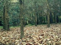 有下落的叶子的森林 库存图片