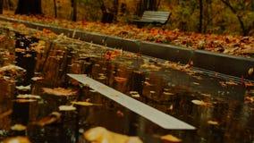 有下落的叶子的秋天公园 免版税库存照片