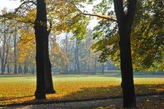 有下落的叶子的秋天公园 库存图片