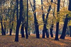 有下落的叶子的秋天公园 库存照片