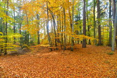 有下落的叶子的秋天森林在11月 免版税库存照片