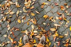 有下落的叶子的鞋子在秋天 免版税图库摄影