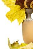 有下落的叶子的水罐 免版税库存照片