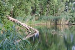 有下落的树干的湖 免版税库存照片