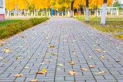 有下落的槭树叶子的胡同 库存照片
