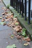 有下落的秋叶的被铺的街道 库存图片
