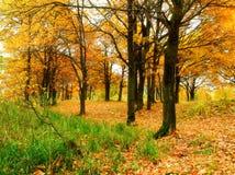 有下落的秋天橡木叶子的秋天森林 秋天在秋天多云天上色了风景-橡木森林 免版税图库摄影