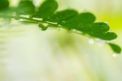 有下落的绿色叶子 免版税库存图片