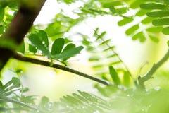 有下落的绿色叶子 免版税库存照片
