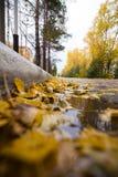 有下落的黄色叶子的路 免版税库存照片