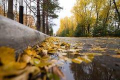 有下落的黄色叶子的路 库存照片