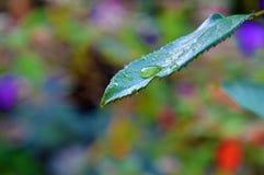 有下落的绿色叶子 库存照片