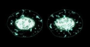 有丝分裂、分裂或者再生产细胞微观看法  向量例证