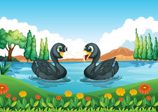 有两只鸭子的一条河 免版税库存照片